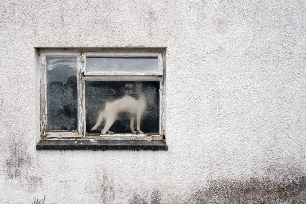 carmarthenshire window dog Math Roberts fotogenik collective street photography