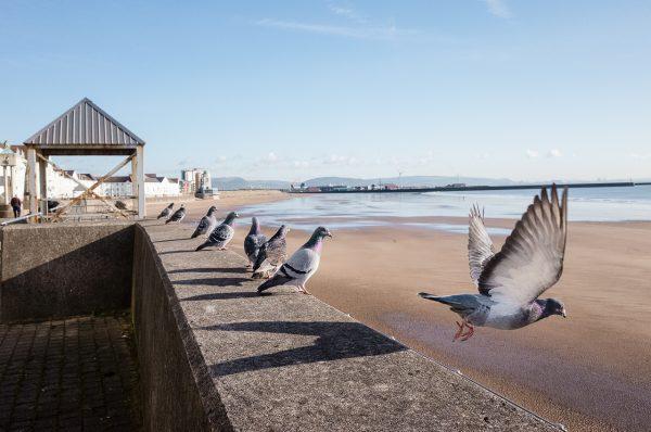 swansea bay pigeons Math Roberts fotogenik collective street photography