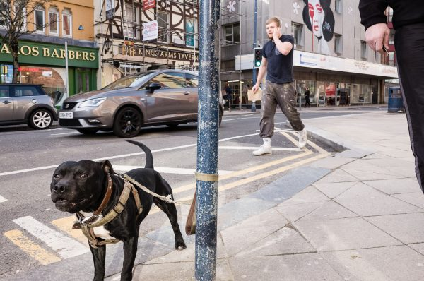 swansea high street dog Math Roberts fotogenik collective street photography
